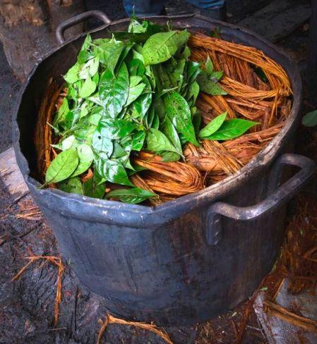ayahuasca-nr-1