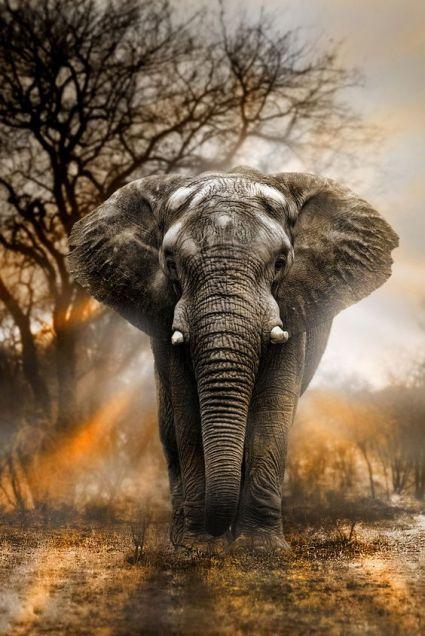 Słoń 1