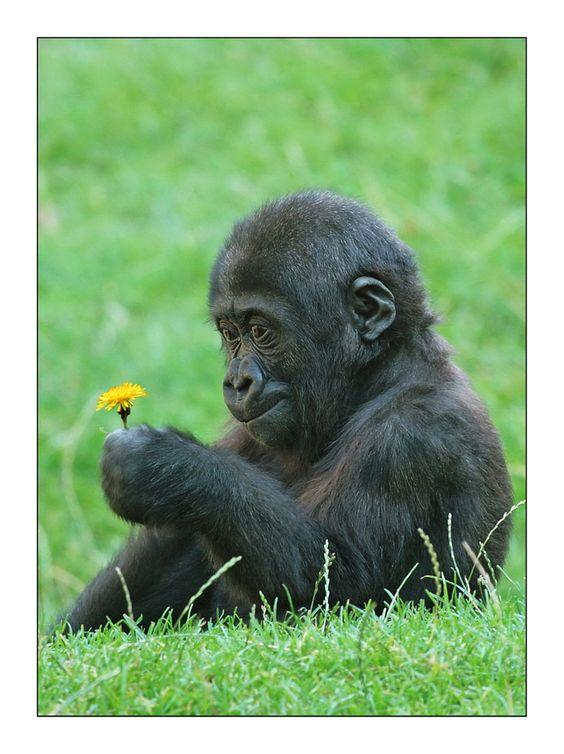 Małpa 3