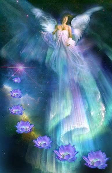 aniol kwiatu 14