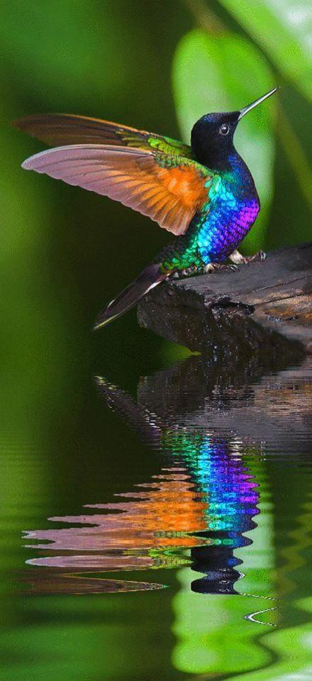 Koliber 1