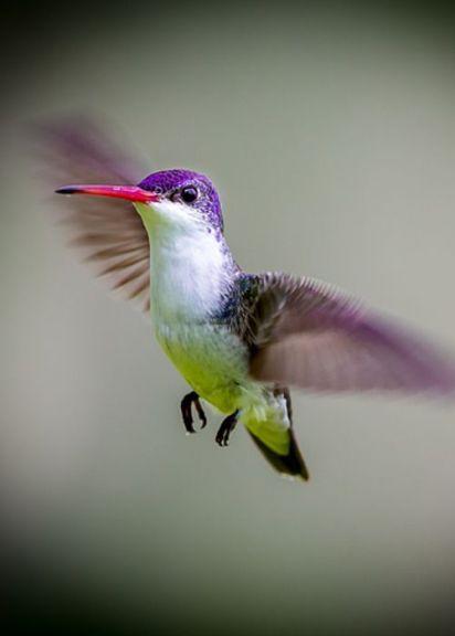 Koliber 3