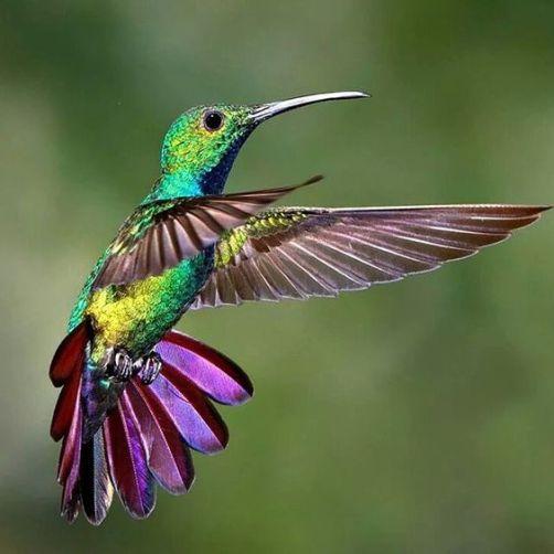 Koliber 4