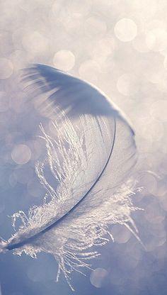 aniol kwiatu 5
