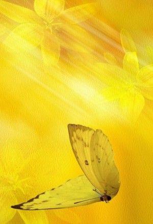 kolor żółty 4