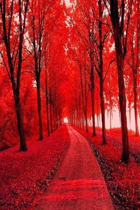 kolor czerwony 6